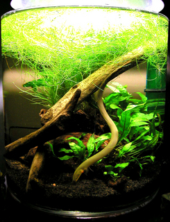 Furniture Aquarium2a.jpg